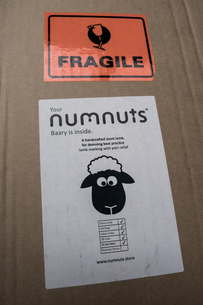 Fragile Lamb Lable Demo Baarry Numnuts