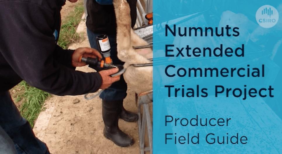 On farm numnuts extended producer trials 2021 run by CSRIO
